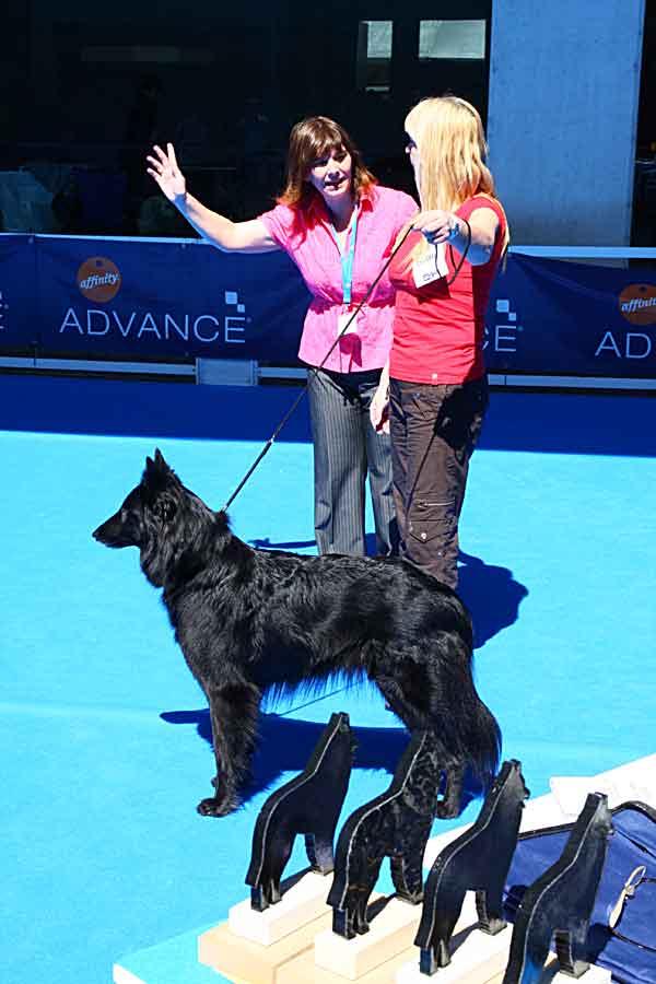 Ya está disponible el Calendario de Exposiciones Caninas 2014.