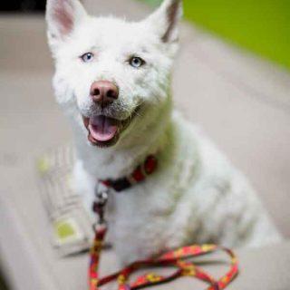 Perro rescatado en un vertedero de Estados Unidos.
