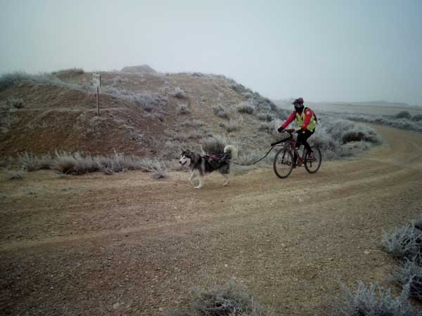 Terminó XXII Travesía de Los Monegros con Perros de Tiro. La etapa nocturna y una fría etapa matinal ponen fin a la travesía.