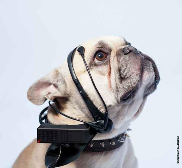 No More Woof. Así se llama el gadget quie asegura ser un traductor de pensamientos caninos mediante el análisis de electroencefalogramas (c/vídeo).