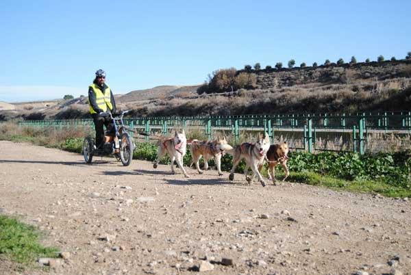 XXII Travesía de Los Monegros con Perros de Tiro, se celebrará en la localidad oscense de Alcubierre entre el 6 y el 8 de diciembre.