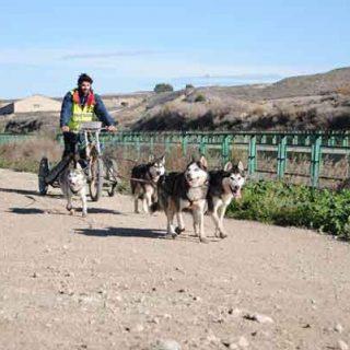 Hoy comienza la XXII Travesía de Los Monegros con Perros de Tiro.