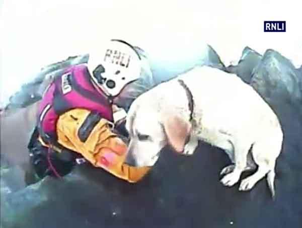 Rescate de un labrador en una escollera de Reino Unido. Moraleja: No persigas focas si no sabes volver.