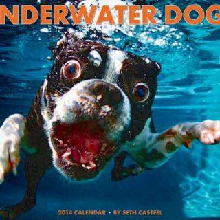 """Seth Casteel ya tiene disponible su calendario 2014 de """"Perros bajo el agua""""."""