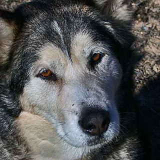 La conducta supersticiosa en el #perro, qué es, cómo se produce... ¿realmente existen?