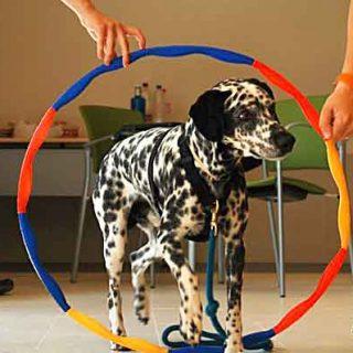 Selección del perro de terapia.