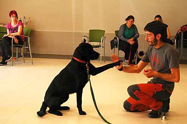 Selección del perro de terapia