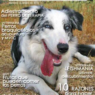 Revista gratis doogweb nº 16, enero 2014