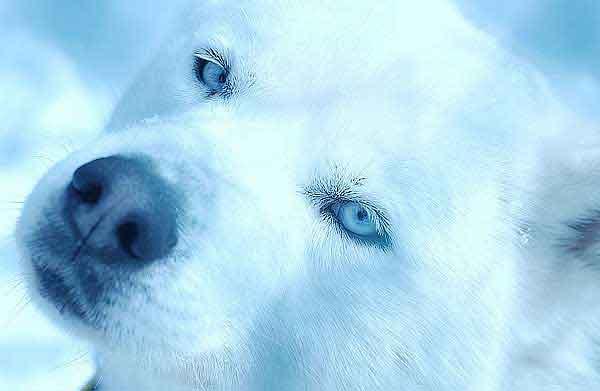 Masaje para perros... contra el estrés (c/vídeo).