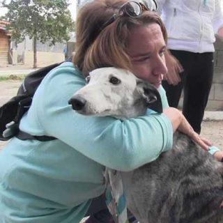 Una familia de Madrid adopta en la protectora El Refugio a una galga abandonada de ocho años, coja y con la enfermedad de la Leishmania.