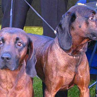 Homeopatía veterinaria y problemas de piel en el #perro...