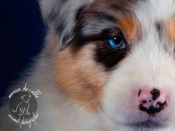 Mónica Do-Allo, retratos de perros y más (y no puedo ser imparcial)... :)