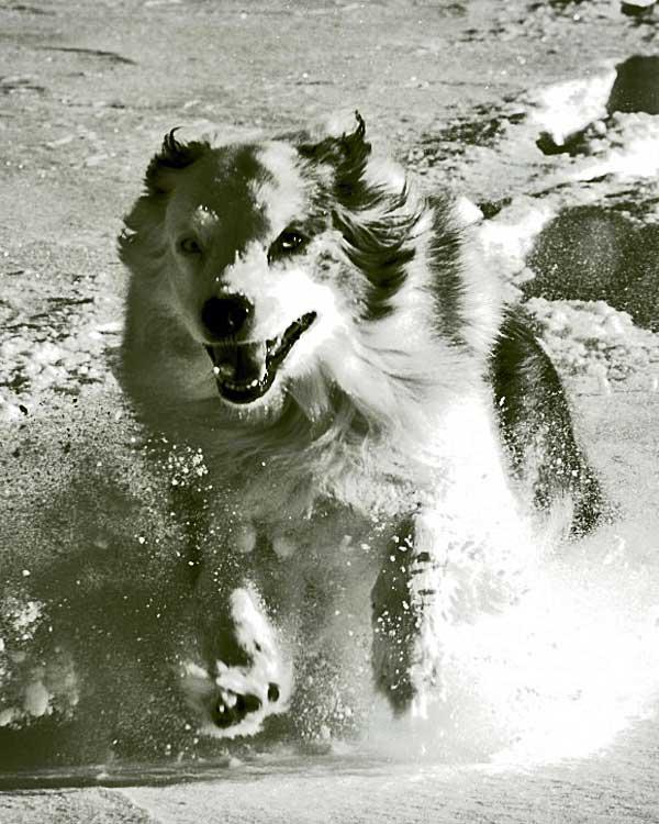 ¿Vas a lllevar a tus #perros a la nieve? 3 riesgos a evitar.