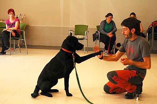 Curso de adiestramiento de perros de terapia