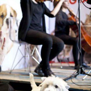 Un concierto para perros, gatos... en el Día de San Antón.