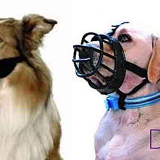 El mejor bozal para los #perros es... dependerá del perro y del objetivo.