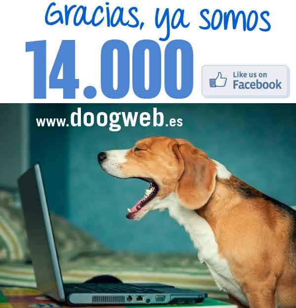 @Doogweb en cifras, páginas vistas, fans en redes sociales, descargas...