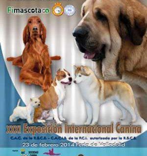 XXXIV Exposición Nacional Canina de Valladolid y XXXI Exposición Internacional Canina de Valladolid.