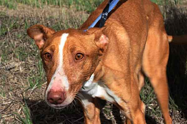 El #perro que quería entrar en la prisión de Estremera, una historia con final feliz.