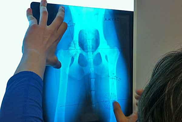 Las placas preventivas de displasia de cadera y los ejercicios prohibidos para los cachorros y perros jóvenes.