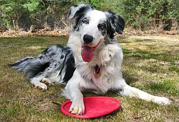 Foto de 5 ideas de enriquecimiento ambiental para perros.
