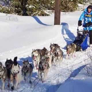"""Amundsen Race 2014 en primera persona... Por Baltasar Gallardo (Equipo Greenheart), ganador en la categoría """"raza puras"""", con su equipo de huskys."""