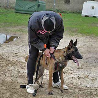 """""""A pesar de haber desarrollado un talento específico, los perros tienen limitaciones como cualquier otra especie. Comprender estas limitaciones mejorará las técnicas de adiestramiento...""""."""