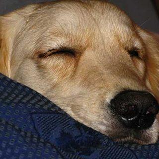 Cinco ideas para disfrutar con tu #perro con mal tiempo.