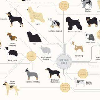 ¿Cómo están relacionada las razas de perros?
