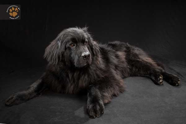 """Black dogs project... O cómo luchar con el """"síndrome del perro negro"""" (c/vídeo)."""