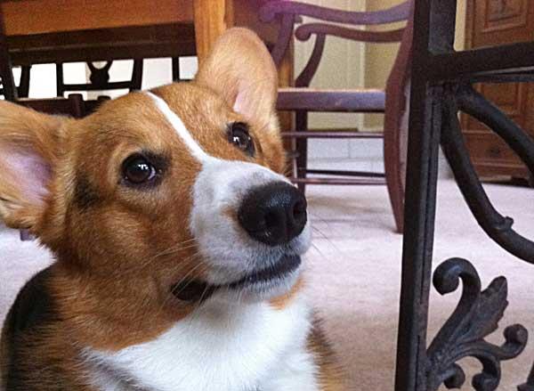 10 ideas para ayudar a los #perros a superar sus miedos.