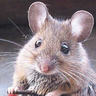 La excelencia del adiestramiento con clicker. Entrenamiento de #perros, gatos y ratas para cine, televisión, anuncios...