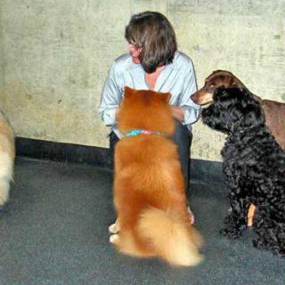 """Susan Friedman visitará España los próximos 12 y 13 de julio. Seminario """"Vivir y aprender con animales""""."""