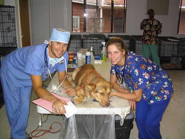 Complicaciones derivadas de la anestesia en perros, razas más sensibles, mortalidad derivada de la anestesia...