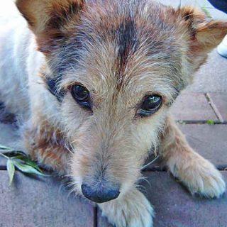 ¿Te salvaría tu #perro en una emergencia? ¿Sería capaz de pedir ayuda? (c/vídeo).