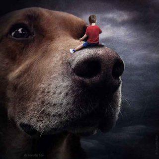 """""""Ayuda a los perros con las imágenes"""" es un proyecto para promover la adopción de #perros de PhotoAllegory of Sarolta Bán."""