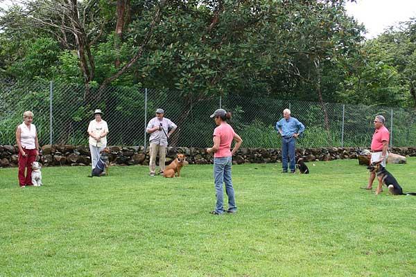 Seminario: Problemas de conducta en los perros, asociados a enfermedades. Conocer esos factores es imprescindible para no implementar protocolos de modificación de conducta equivocados y, sobre todo, más efectivos al identificar la causa principal del problema.