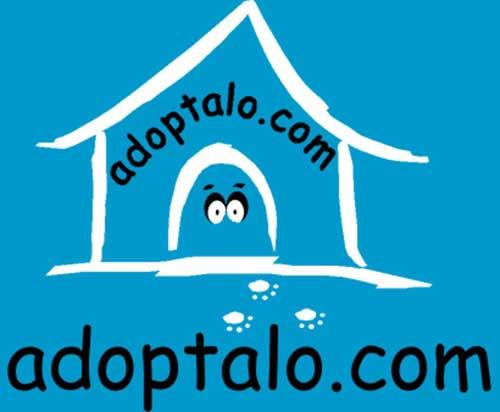 #yoadoptéporque Cada 3 minutos se abandona una mascota en España.