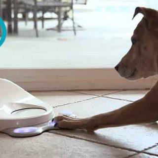 CleverPet, entretenimiento para perros. Un genial gadget perruno que todavía no existe... pero que pronto pasará a la producción para ayudar a los perros con ansiedad por separación.
