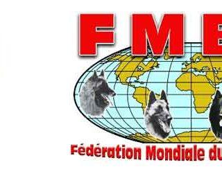 Campeonato del mundo de pastor belga