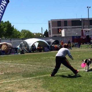 Se ha celebrado la competición Dog Chow Disc Cup, clasificatoria para el Mundial USDDN España.