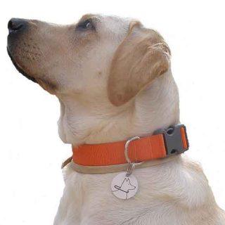 Guinness, con el distintivo oficial de Perro de Asistencia en la Comunidad Valenciana.