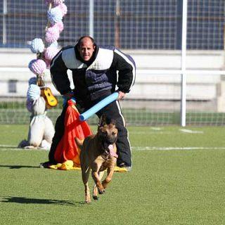 Copa de España de Mondioring Alovera 2014 en imágenes