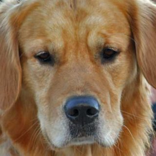 La nueva Ordenanza de Animales de Compañía de Barcelona, revisada, ya está aprobada en la comisión inicial.