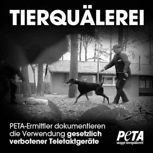 PETA denuncia a centros caninos alemanes por utilizar collares eléctricos y métodos abusivos de entrenamiento.
