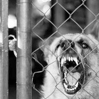 Los 5 (+ 1) problemas principales de los #perros (o mejor dicho de los dueños).