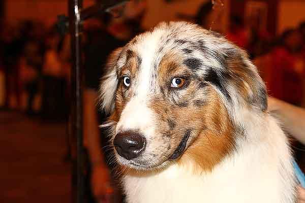 """Los perros reactivos... ¿nacen o se hacen? Las 5 causas por las que un perro puede ser """"reactivo""""."""
