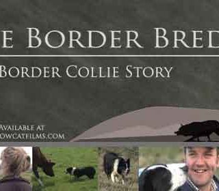 La Historia del Border Collie (documental). Del border collie de trabajo, claro.