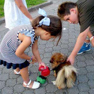 Comportamiento del perro: espejo de la relación con su dueño