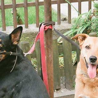 #Perros con bozal ¿por qué no? Los perros con bozal NO son perros peligrosos, son perros seguros.